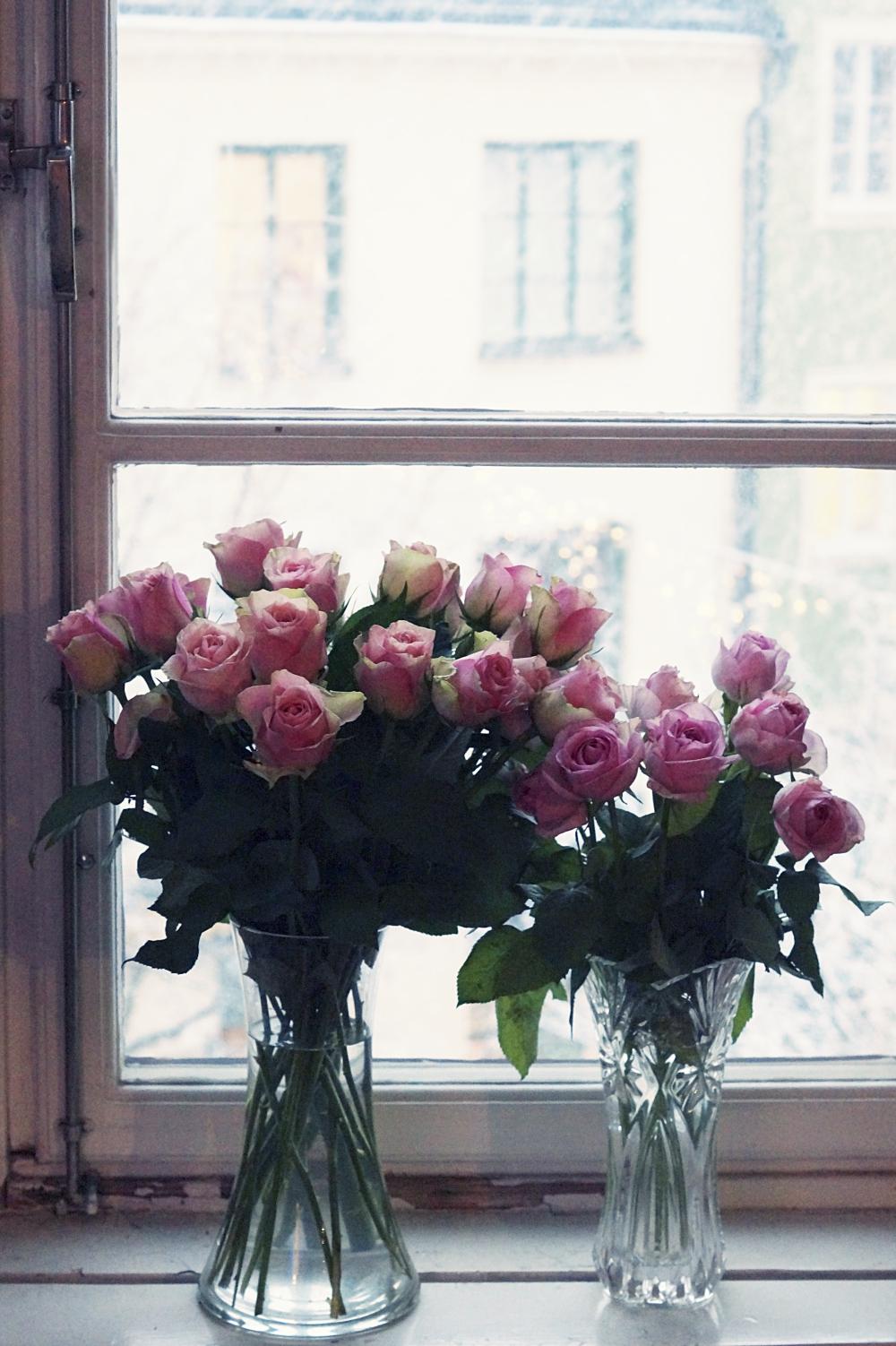 focus : roses